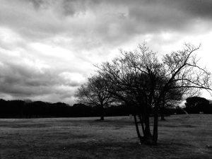 大仙公園の木