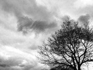 大仙公園の木②